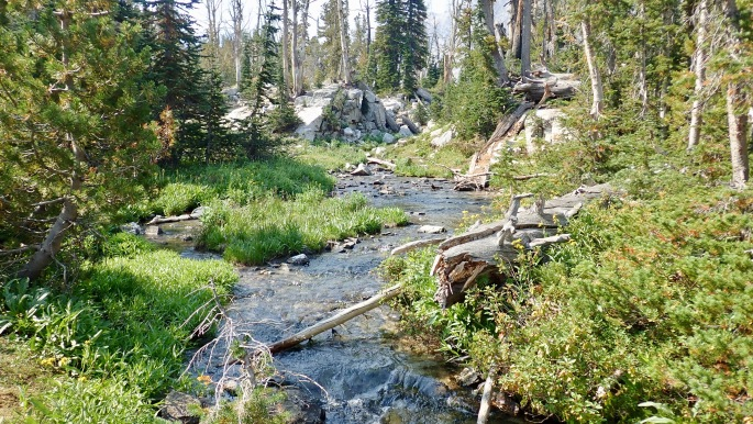 The Sawtooths have many streams like this one.