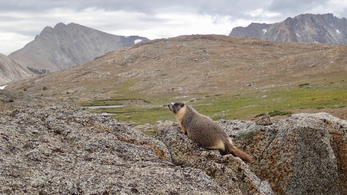 This marmot gets to live here.  Does it enjoy the view like the hikers do?
