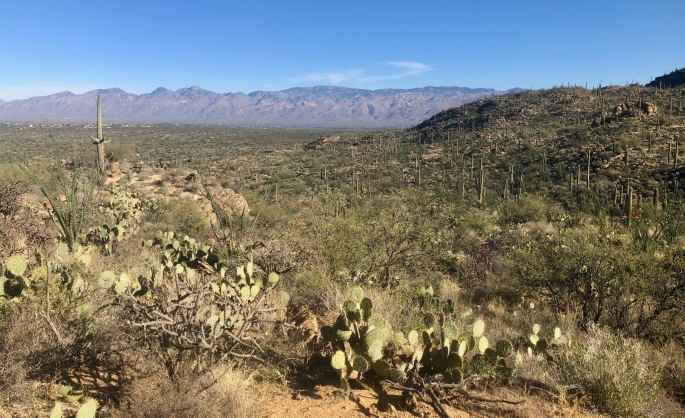 At low elevations, the area is a cactus forest.