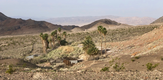 Palm trees  at the Ibex spring.  Many abandoned building hint at the past.