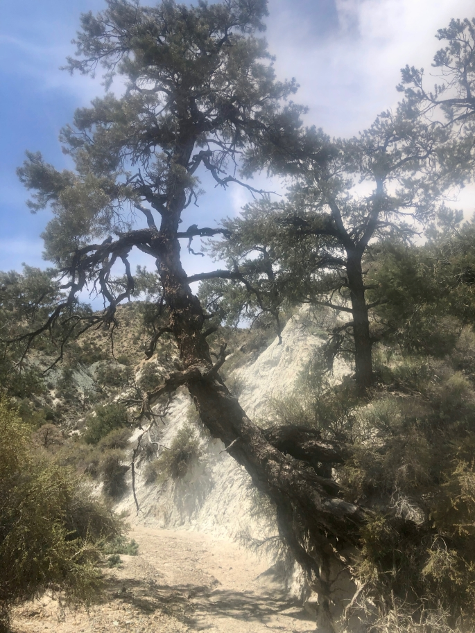 How can a heavy tree maintain a hold in that rock at that angle?