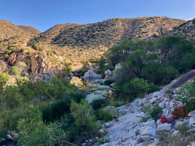 A quiet section of the Mojave River on a quiet morning