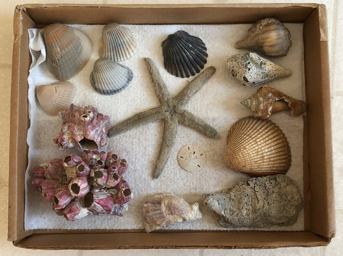 I was able to pick up a decent assortment of seashells on the beach