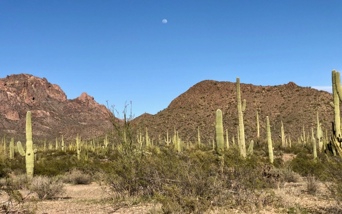 A nice desert scene even if it contains no organ pipe cacti